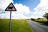 Sheep warning sign by sweeping bend on road side, North Devon, Exmoor, England