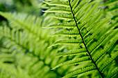 Plant detail, Close up, United Kingdom