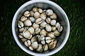 Shellfish in bucket on lawn, Outer Hebrides, Scotland