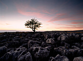 Limestone pavement at Twisleton Scars, Yorkshire Dales National Park, North Yorkshire, England, UK
