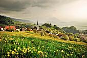 Meadow with dandelions, church in village, view at mountains of Liechtenstein, around Dornbirn, Vorarlberg, Austria