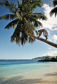 Local Samoan climbs up palm tree to get a coconut, Return to Paradise Beach, Upolu, Samoa, Southern Pacific
