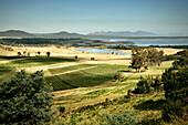 Vineyard at the east coast, view towards Freycinet National Park, Tasmania, Australia