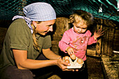Woman and girl collecting eggs, Hofbauern-Alm, Kampenwand, Chiemgau, Upper Bavaria, Germany