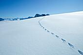 Snowshoe tracks on Zugspitzplatt, Upper Bavaria, Germany