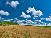 Cornfield and grain field near Muensing, Upper Bavaria, Germany