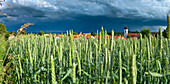 Thunder clouds above grain field, Utting, lake Ammersee, Upper Bavaria, Germany