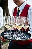 Waitress carrying a tray full of white wine, Wine region, Poysdorf, Lower Austria, Austria