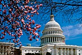 U S  Capitol in spring, Washington, DC
