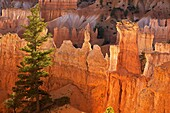Bryce Canyon National Park - Utah - ´hoodoos´ - ´Hoodoos´ are pillars of rock carved by erosion - water Ice and gravity are the forces sculpting hoodoos-especially freeze-thaw processes - occur in Claron formation containing limestone - siltstone - dolomi