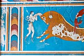 Acrobatics on Toro Fresco, Palace of Knossos, Crete Island, Aegean Sea, Greece