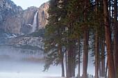 Yosemite Falls and Redwoods in winter Yosemite National Park, California, USA