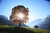 Nature, Tree, Sun, Sunbeam, Flare, Dramatic, Europe, Switzerland, Schächental, Uri, Swiss Alps, Mountain, Valley, Tranquil, Landscape, Scenic, Spring, No People, Horizontal. Nature, Tree, Sun, Sunbeam, Flare, Dramatic, Europe, Switzerland, Schächental, Ur
