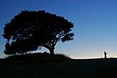 Oak on a hill, Bonany Villafranca de Mallorca Illes Balears Es Pla Spain