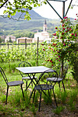 Seating area in the garden with hanging roses, Agriturismo and vineyard Ca' Orologio, Venetia, Italy