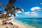 Seaside promenade with palm trees, Playa del Matorral, Morro Jable, Jandia peninsula, Fuerteventura, Canary Islands, Spain
