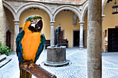 Parrot at the courtyard of the Columbus Museum, Casa de Colon, Vegueta, Las Palmas, Gran Canaria, Canary Islands, Spain, Europe