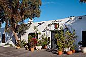 Pflanzen vor einem Haus, Teguise, Lanzarote, Kanarische Inseln, Spanien, Europa
