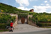 Fahrradfahrer beim Fotografieren vor dem Eingang zum Weingut, Weinberg Tor, Weinanbau an der Saale und Unstrut, Freyburg, Sachsen-Anhalt, Deutschland