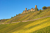 View of Thurant castle, Alken, Rhineland-Palatinate, Germany, Europe