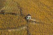 Vineyard house close to Bernkastel-Kues, fall, Bernkastel-Kues, Rhineland Palatinate, Germany