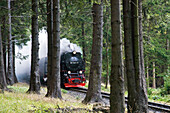 Forest, steam railway, Brockenbahn, stream train, HSB Harz narrow-gauge railways, Schierke, Harz, Saxony-Anhalt, Germany