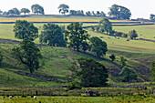 Idyllic landscape at Yorkshire Dales National Park, Yorkshire Dales, Yorkshire, England, Great Britain, Europe