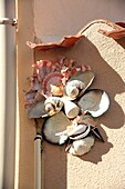 Les Sables d&39, Olonne, Danielle Aubin-Arnaud, the lady with shells hanging on the walls of houses in the neighborhood of the island Penotte, a mosaic of shells representing marine motifs, mythological, bestiary Island, Travel and
