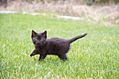 A black kitten outdoors in a yard.