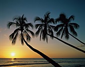 beach, escape, exotic, inspirational, palm, paradis. Beach, Escape, Exotic, Holiday, Inspirational, Landmark, Palm, Paradise, Sun, Sunrise, Sunset, Tourism, Tranquility, Travel, Tre