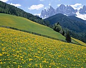Dolomites Mountains, Dolomiti, Italy, Trentino, Val. Dolomites, Dolomiti, Flowers, Holiday, Italy, Europe, Landmark, Mountains, Tourism, Travel, Trentino, Vacation, Val di funes, Vi
