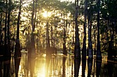 Atchafalaya Basin, Henderson, Louisiana, United States of America, Americas