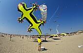europe, italy, lazio, ostia beach, international kites meeting, the huge lizard projected by kites designer peter leen