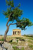 Italy, Sicily, Agrigento, Valley of the Temples, Valle dei Templi, Concordia Temple