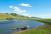 Mongolia, Ovorkhangai province, Yurt camp, Orkhon valley