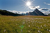 Cortina, sunburst and wildflowers in a meadow below Sas De Stria near Passo Falzarego high above the city of Cortina in northern Italy