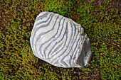 A detailed view shows a striped rock amidst star moss at Rinshouin, a Buddhist sub-temple of Myoshinji Temple, located in the northern area of Kyoto, Japan.