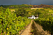 South Africa, Western Cape Province, Winelands, Paarl valley, Wine road, house of the Ko-operatieve Wynbouwers Vereniging Estate