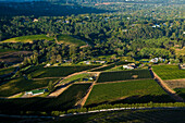 South Africa, Western Cape Province, Winelands, Constantia valley, Wine road, the vineyards
