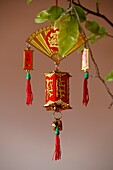 Chinese New Year decoration in a home . Kampot. Cambodia. (Kampot, Kampot, Cambodge)