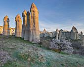 Fairy Chimney in the  Valley of love, Tufa erosion, Goereme National Park, UNESCO World Nature Site, Cappadocia, Anatolia, Turkey
