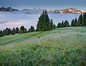 Blick über das Val die Sole zum Adamello Massiv, Brenta Adamello Naturpark, Ortisé, Trentino, Italien