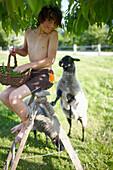 Boy sitting on a ladder, sheep in background, Klein Thurow, Roggendorf, Mecklenburg-Western Pomerania, Germany