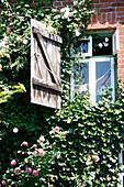 House wall with climbing plant, Klein Thurow, Roggendorf, Mecklenburg-Western Pomerania, Germany