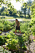 Woman gardening, Klein Thurow, Roggendorf, Mecklenburg-Western Pomerania, Germany