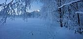 Branches with hoar frost, Ennstal Alps, Ennstal, Styria, Austria, Europe