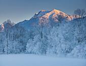 Trees with hoar frost, Ennstal Alps, Ennstal, Styria, Austria, Europe