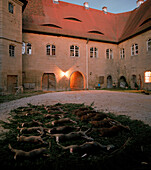 Hunted down wild sows, roe deer and foxes, courtyard of Schloss Frankenberg, Weigenheim, Middle Franconia, Bavaria, Germany, Europe
