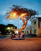 Bar under acacia tree at Praia de Dante, Sal Rei, Boa Vista, Ilhas de Barlavento, Republic of Cape Verde, Africa
