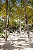 Hammocks hanging from coconut trees at Xel-Ha Water Park, Tulum, Riviera Maya, Quintana Roo, Mexico
